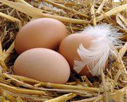 Яйцо куриное С-1,  самая выгодная цена
