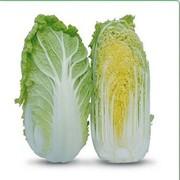 Семена пекинской капусты KS 399 F1 фирмы Китано