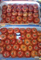 Продам помидор крупный и средний в Овидиополе.