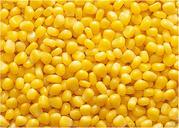 Закупаем кукурузу большими объёмами