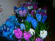Живые цветы-гиацинты, крокусы и тюльпаны на 14 февраля и 8 марта