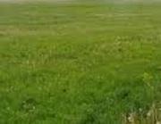 Продам земельный участок Институт Таирова,  кооператив Виноградарь