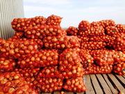 Продам мелкий лук 6 т в Одесской области,  с. Барабои