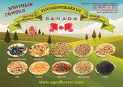Импортные высокоурожайные семена