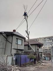 Спилить дерево любой сложности в Одессе - 100% аккуратно